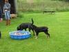 2011-09-17_10-03-32-Trine-Welpenspiel