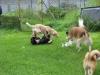 2011-09-17_10-04-44-Trine-Welpenspiel